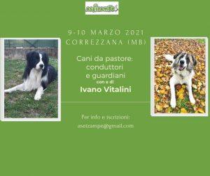 CORREZZANA (Monza) 9-10 Marzo 2021 - Cani da Pastore: conduttori e guardiani con Ivano Vitalini