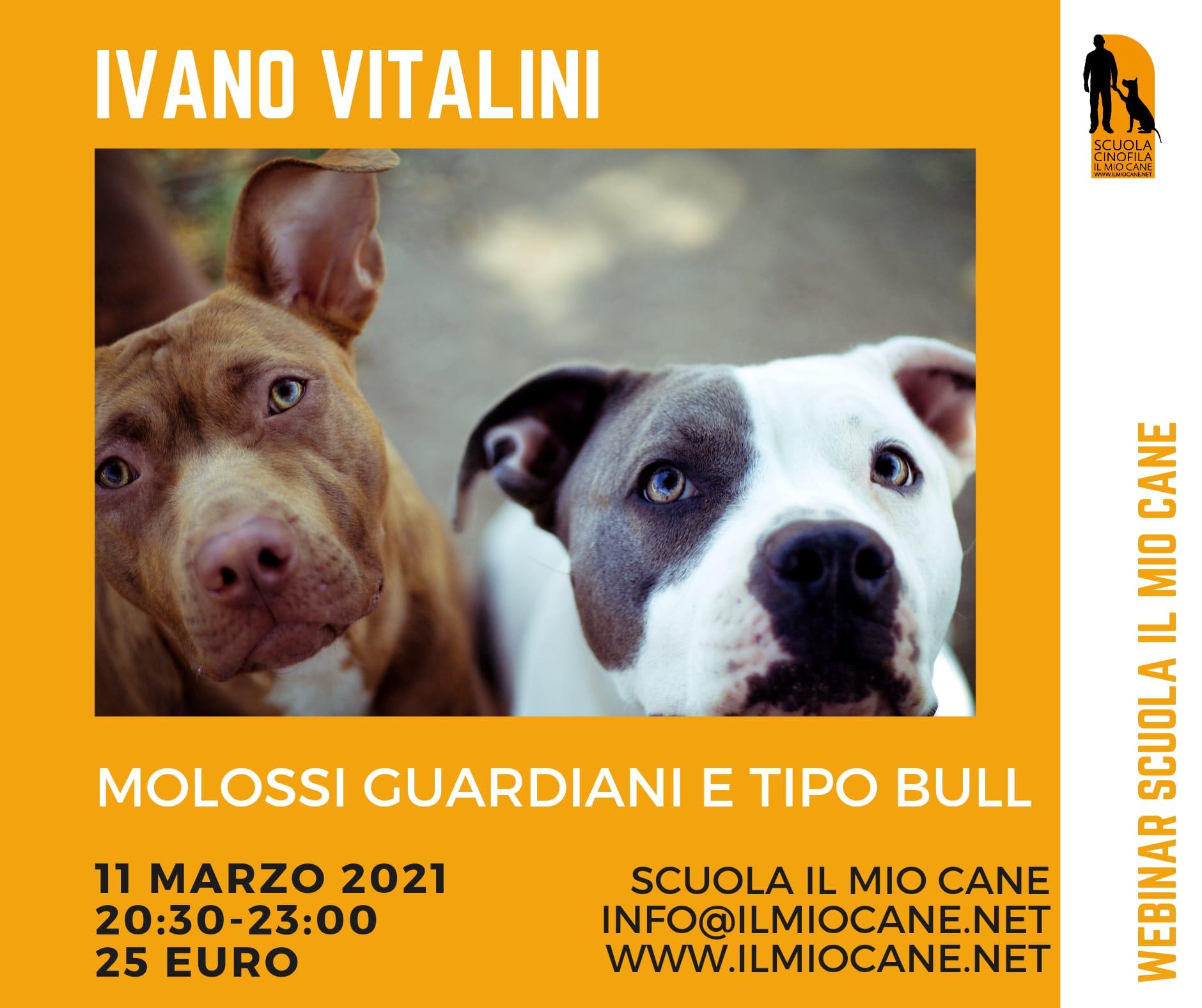 Webinar 11 Marzo 2021 - Molossi guardiani e tipo pitbull con Ivano Vitalini