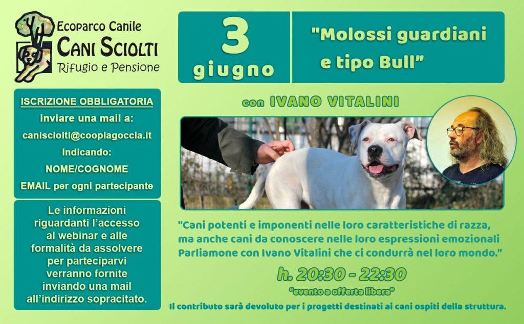 Webinar 3 Giugno 2021 - Molossi guardiani e tipo Bull con Ivano Vitalini