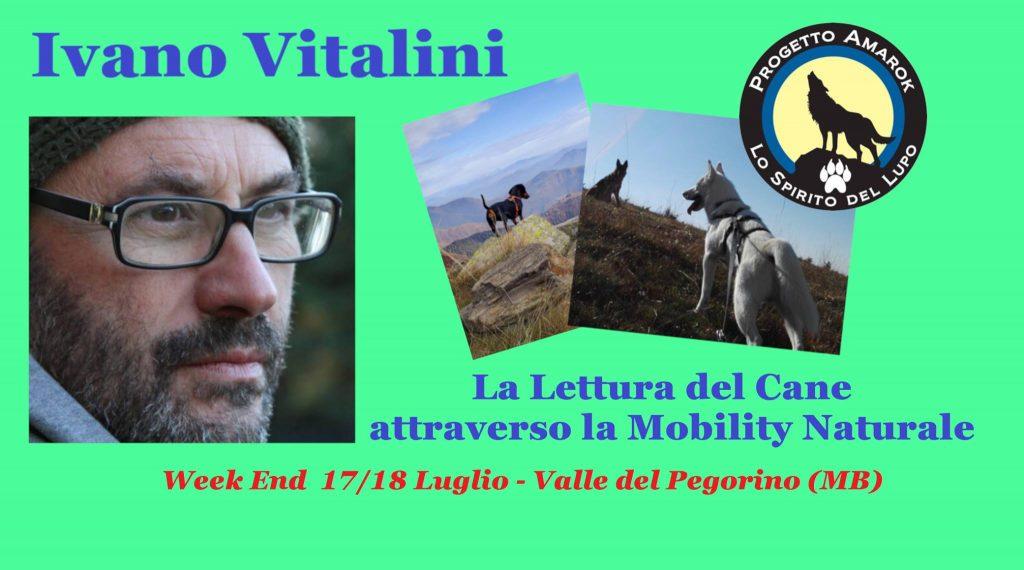 MONZA 17 e 18 Luglio 2021 - La Lettura del cane attraverso la Mobility con Ivano Vitalini